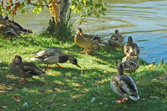 Fielding Memorial Park: Local wildlife