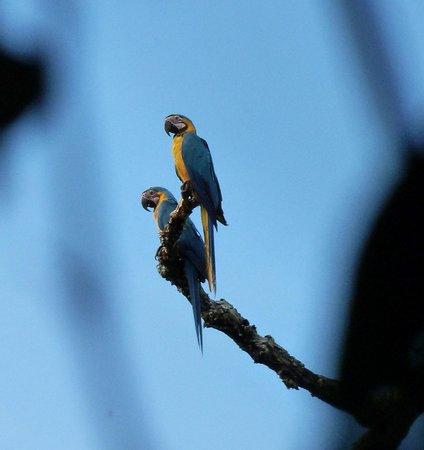 Amazonia Expeditions' Tahuayo Lodge: McCaws