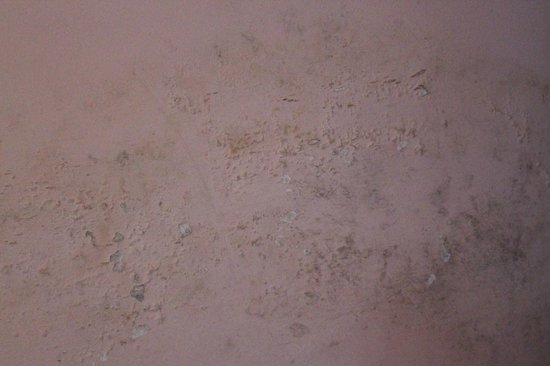 Backyard Hotel: Mold covers the walls
