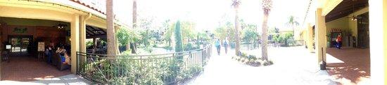 Doubletree by Hilton Orlando at SeaWorld: Passeggiata tra la piscina e la zona bar/ristoranti