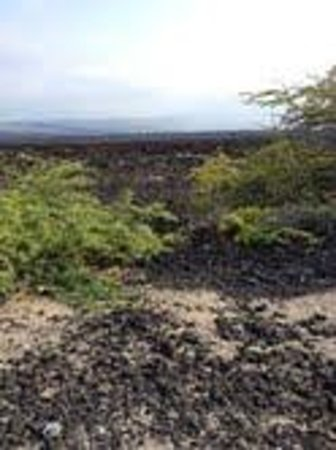 Lava Lava Beach Club Cottages : The lava fields that are around cottages