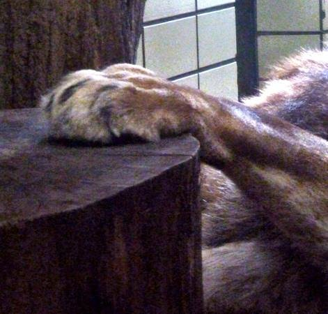 Dortmund Zoo: Paws for thought