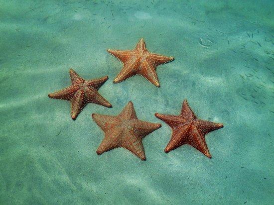Playa Estrella: Playa de las Estrellas