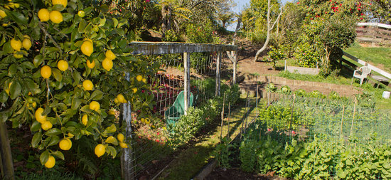 Lakeview Heights Farm Stay: Fruit and veg garden