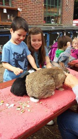 Farmyard Funworld: rabbit petting