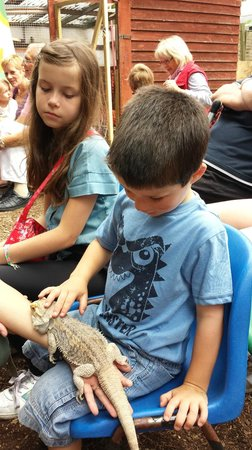 Farmyard Funworld: reptile petting