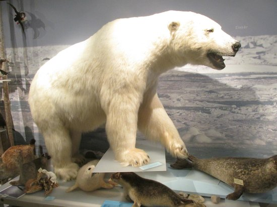 The Polar Bear Society