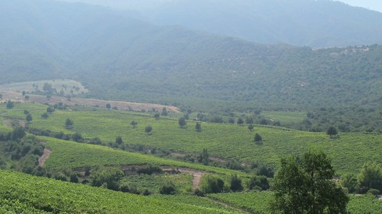 Lapostolle Residence Restaurante: The Vineyard