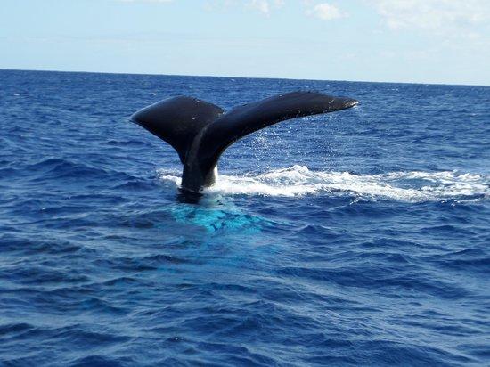 Hilton Moorea Lagoon Resort & Spa : A whale of a trip