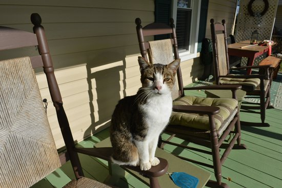 Piney Hill Bed & Breakfast: Sweet cat