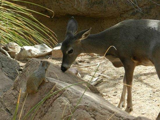 Museo del Desierto Arizona-Sonora: roomates