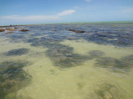 Ponta de Pedras, PE: Pedras no mar