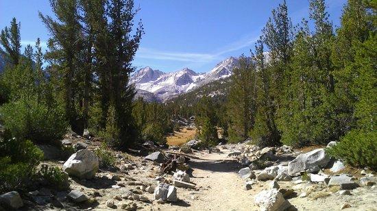 Mountainback at Mammoth: 4