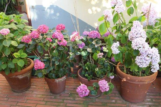 Hotel Francia e Quirinale : flowers around