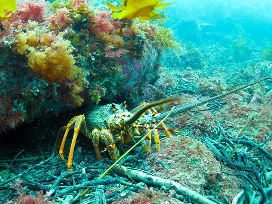 One of the many friendly crayfish we saw