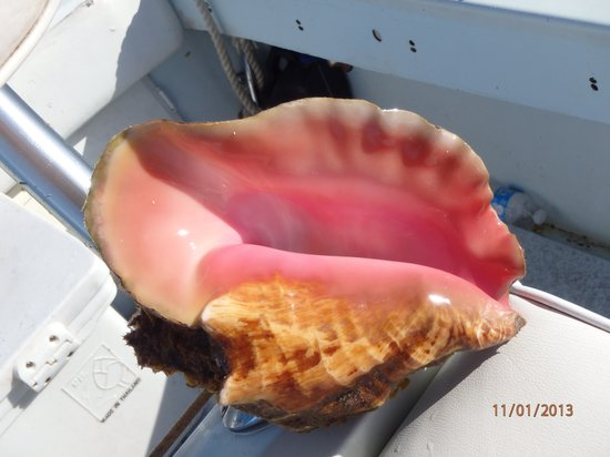 Bimini Hidden Treasures: Conch