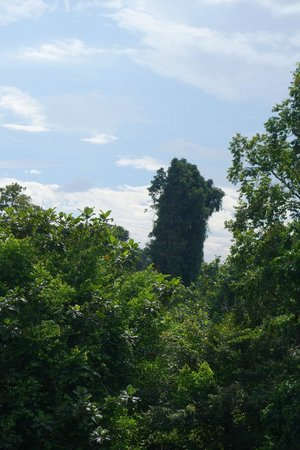 Peninsular Botanic Garden - Thung Khai: Botanic Garden