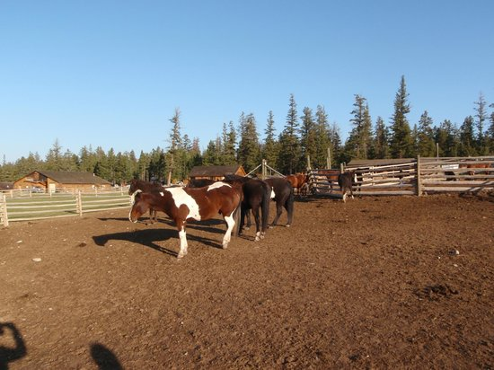 Echo Valley Ranch & Spa: Horsepaddock