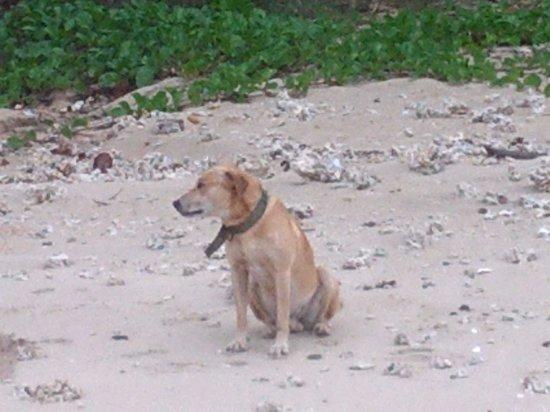 Beach Cocomo : Wishbone
