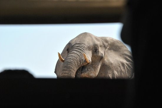 Camelthorn Lodge : in the bunker and the elephants didnt know we were there!!