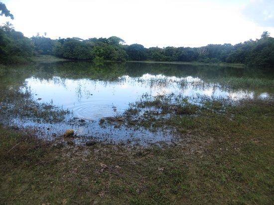 Laguna Big Pond: La laguna
