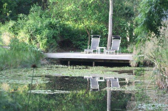 Bloomestate: Pond