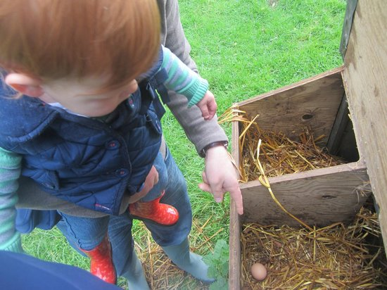 Chark Farm : Fresh eggs for breakfast!