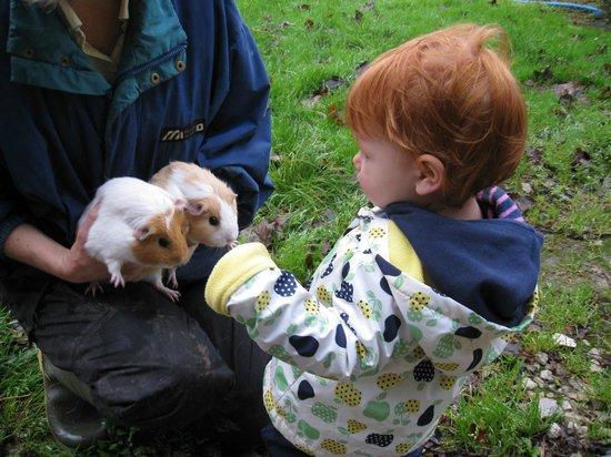 Chark Farm: Guinea pigs