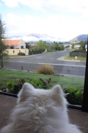 Montrose Bed & Breakfast Wanaka: Mika's routine, looking out of the window