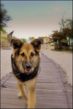 Varanda : Bagui, the onsite puppy