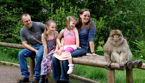 Stoke-on-Trent, UK: Trentham Monkey Forest