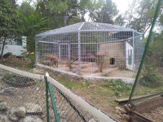 Zoo Fauverie du Faron : Hyena Cage