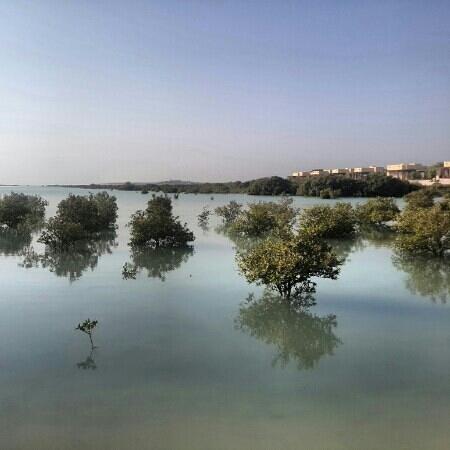Anantara Sir Bani Yas Island Al Yamm Villa Resort: mangroves