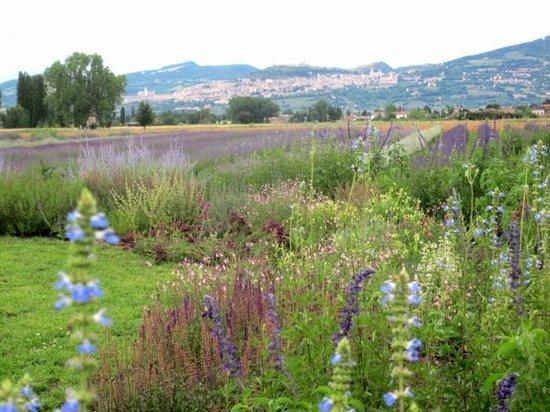 Giardino vivaio delle salvie ornamentali vendita piante e for Piccoli giardini ornamentali