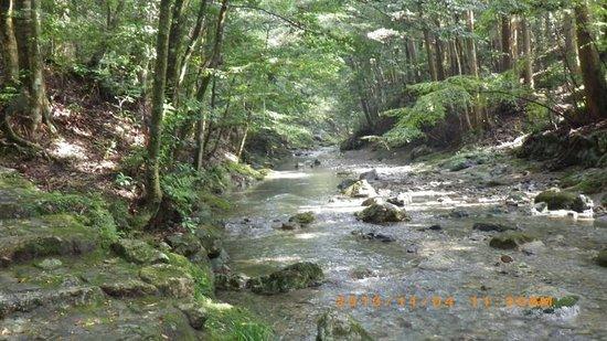 Taiki-cho, Japan: 御手洗場_大内山川の支流_1