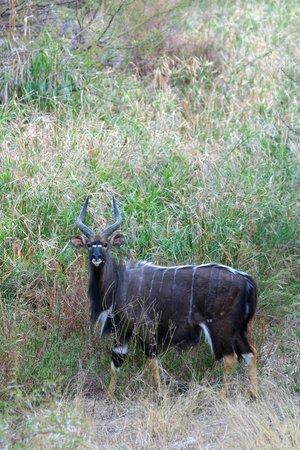 Ekland Safaris: Nyala