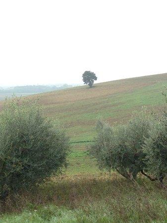 Tramonto su Assisi: I dintorni......