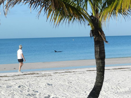 Tiki On The Beach: A dolphin stopped by.