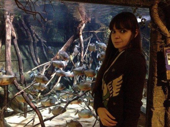 SEA LIFE Helsinki: Аквариум с пираньями