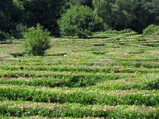 Labyrinthe Géant des Monts de Guéret : Labyrinthe géant 22000 m2
