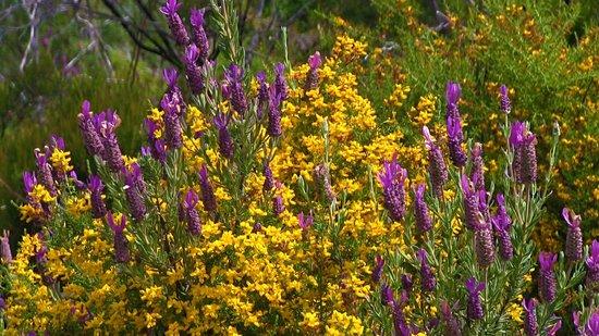 Rota Vicentina : flowers on the way