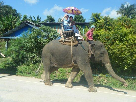 The North Hotel: Elephant Chiang Rai