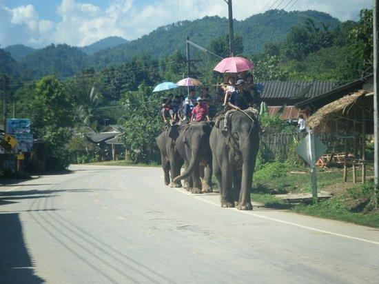 The North Hotel: Elephants Chiang Rai