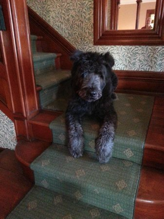 Fordham House: house dog, sweet and calm.