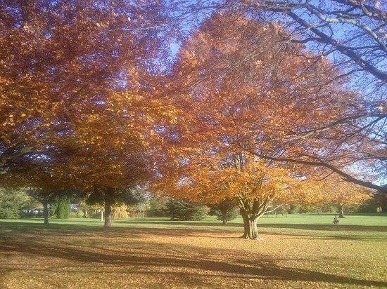 Nonsuch Park Autumn - Picture of Nonsuch Park, Epsom ...
