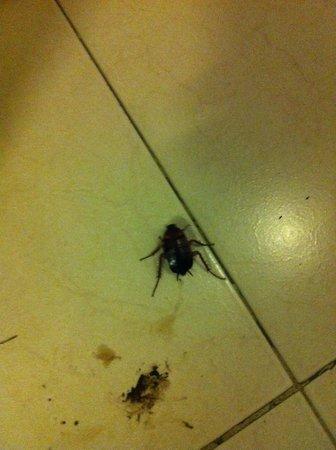 Valentine Hotel: Cucaracha en el baño