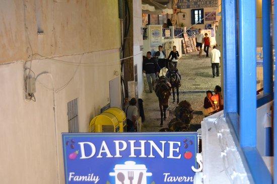 Daphne Casserole : Donkeys retiring for the night