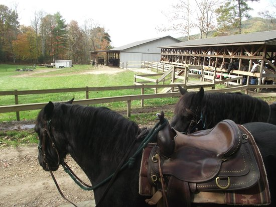 Cades Cove Riding Stables: Getting ready to head out on trail at Cades Cove Stable