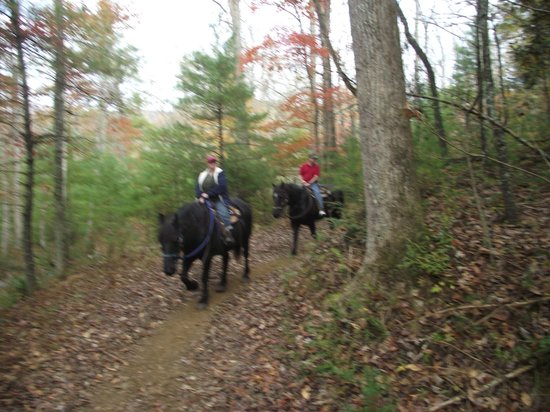 Cades Cove Riding Stables: on the trail, Cades Cove Stable