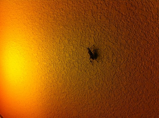 La Quinta Inn & Suites Mt. Laurel - Philadelphia: Insect of some kind in the room